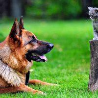 Котёнок сидит на пеньке и смотрит на собаку