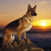 Красивый пёс на фоне встающего солнца
