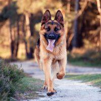 Пёс бежит по дорожке