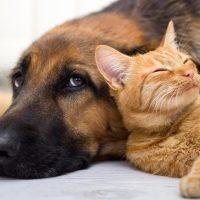 Рыжий кот уснул возле собаки