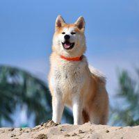 Красивый пёс на фоне неба