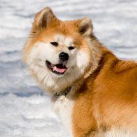 Лохматая собака на снегу