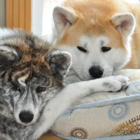 Две собаки спят на подушках