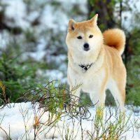 Пёс в зимнем лесу