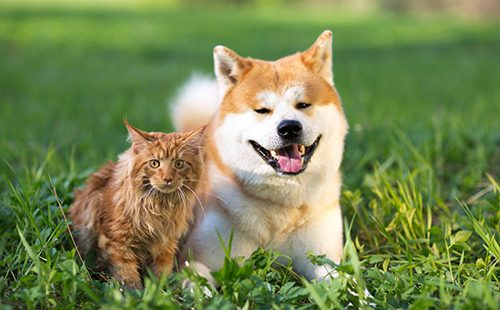 Пёс и кот рядом на траве