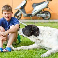 Большой пёс утешает мальчика