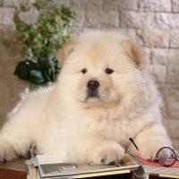 Белый щенок словно читает газету