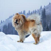 Большой пёс в снежных горах