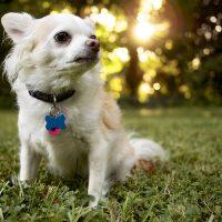Красивый пёсик в лучах заходящего солнца
