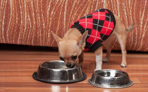 Щенок в пуловере пьёт воду из миски