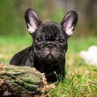 Пёсик играет в траве