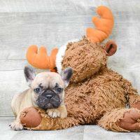 Пёсик с игрушечным лосем