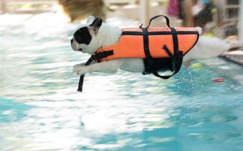 Пёсик прыгает в бассейн