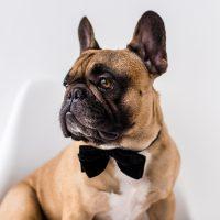 Пёс-аристократ в галстуке