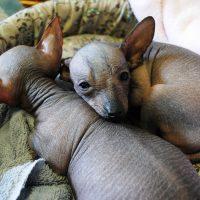 Два щенка спят в обнимку