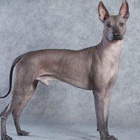 Пёс у голубой стены
