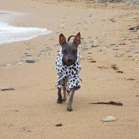 Ксоло в курточку бежит по берегу моря