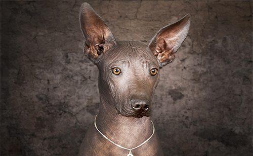 Портрет языческой собаки