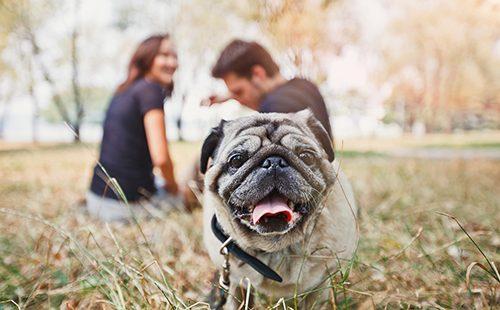 Молодая пара с мопсом в осеннем парке