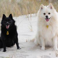 Инь и ян в собачьем исполнении