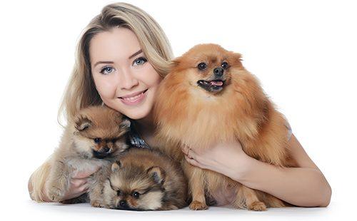 Девушка с взрослым померанским шпицом и щенками