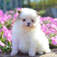 Белый щенок среди цветов