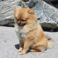 Симпатичный пёсик на серых камнях