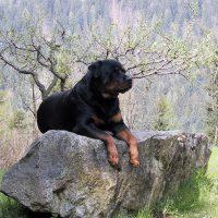 Пёс лежит на камне в весеннем саду
