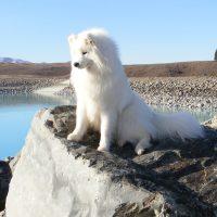 Белый пёс на утёсе
