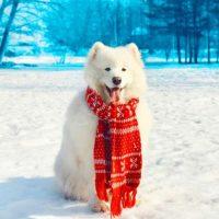 Пёс в красном шарфике