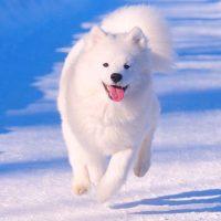 Весёлый пёс бежит по снегу
