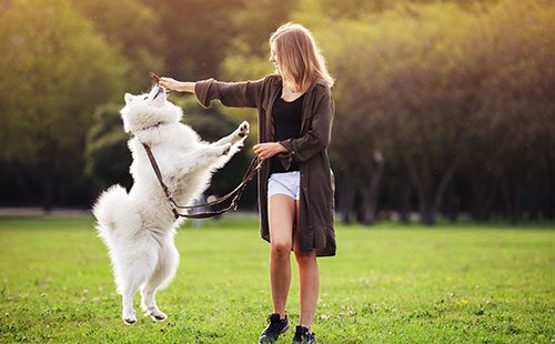Девушка играет с самоедской лайкой