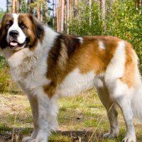 Красивый пёс в профиль