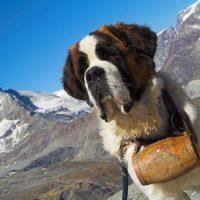 Пёс-спасатель на фоне гор