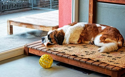 Сенбернар лежит на лежанке