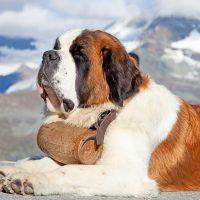 Красавец-пёс на фоне гор