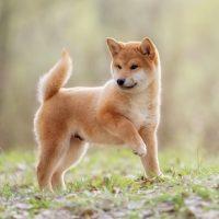 Красивая собака на природе