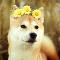 Собака в цветочном венке