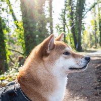Породистый пёс в утреннем лесу