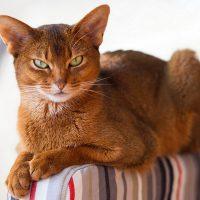 Портрет хмурого кота