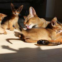 Кошка с котятами греется на солнце
