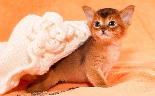 Котёнок выбирается из-под вязаной шляпки