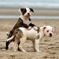 Два щенка играют на пляже