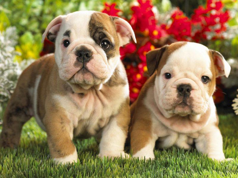 Картинки пород собак фото