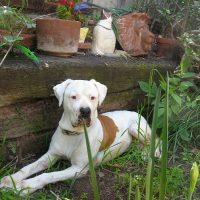 Собака отдыхает в саду