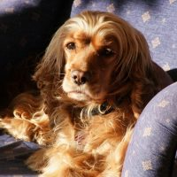 Задумчивый пёс на диване