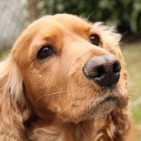 Грустная собачья мордашка