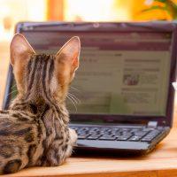 Котёнок возле ноутбука