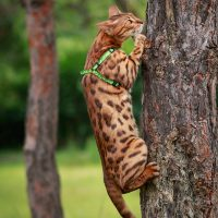 Кот лезет на дерево