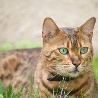 Кот с зелёными глазами